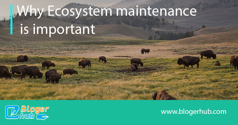 How ecosystem can be protected