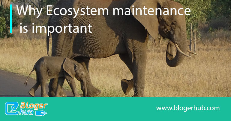 How important it is to balance the ecosystem